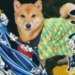 【鬼滅の刃寸劇】犬柱さす岡義勇参上! 煉獄さんのビッグタルトをかけて炭治郎と椅子取りゲームで勝負だ! 対決 柴犬
